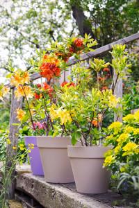 tuinplant_vd_maand2-200x300