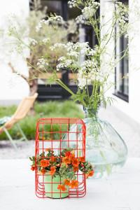 tuinplant_vd_maand_mini_petunia2-200x300